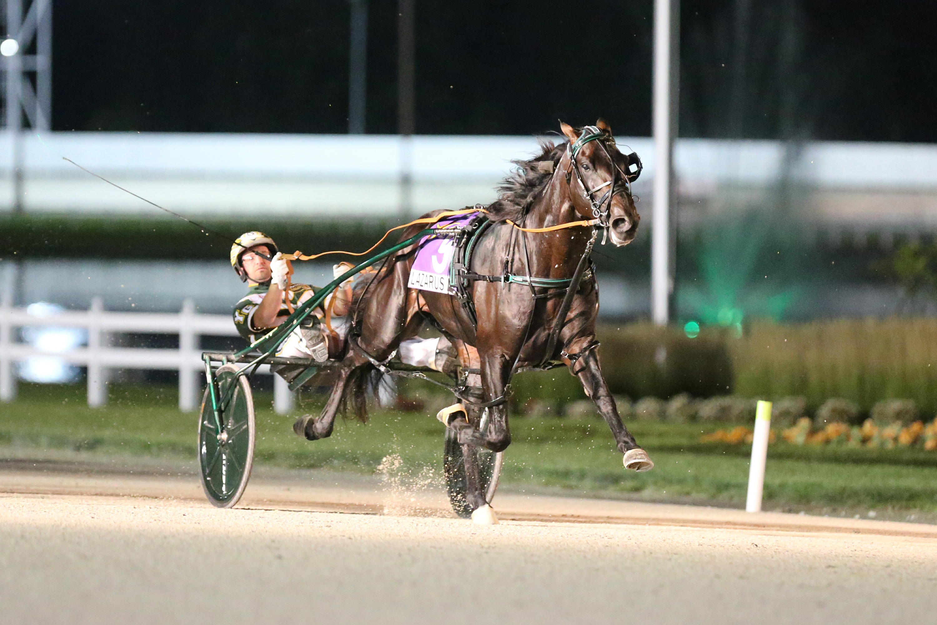 Lazarus wins: Champ bounces back in US - Harness Racing Victoria